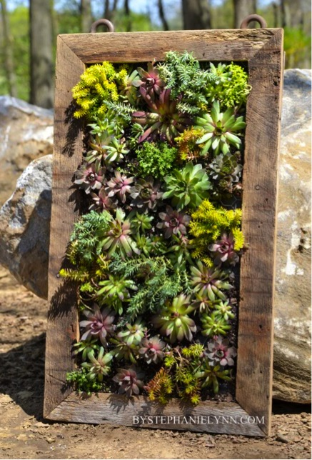 How to make a beautiful vertical succulents garden do it for How to make a beautiful garden