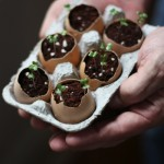 how to sprout seeds in egg shells
