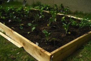 DIY Easy Cheap Raised garden bed