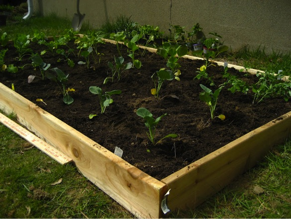 How To Make An Easy Raised Garden Bed On A Budget Do It Yourself