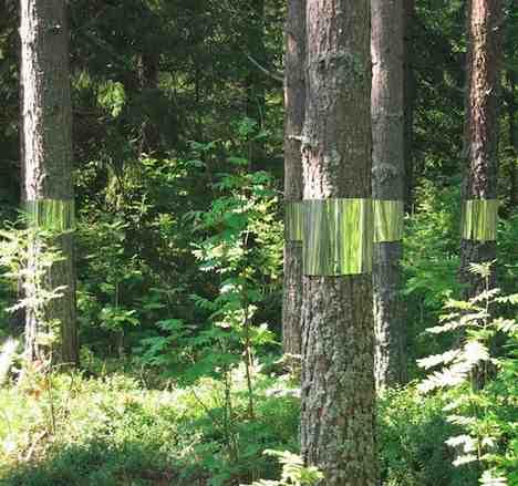 clear cut mirrored trees Joakim Kaminsky and Maria Poll