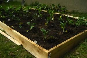 DIY Easy Cheap Raised garden bed